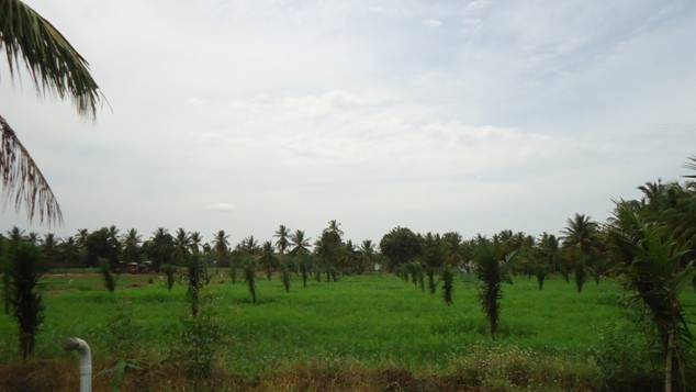 100 coconut oil - 4 7