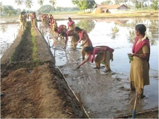 Tamil Nadu Agricultural University | Top Universities