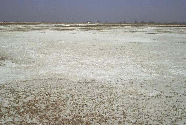 Stress management salinity for Soil salinization