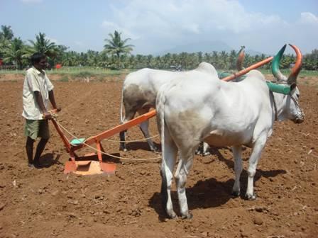 agricultural tools essay