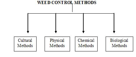 weed control management in crop production essay Glyphosate-resistant spring wheat production system to weed management and crop production should control, diversity, and yield weed science 57.