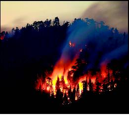 Major Areas :: Disaster Management :: Forest Fire