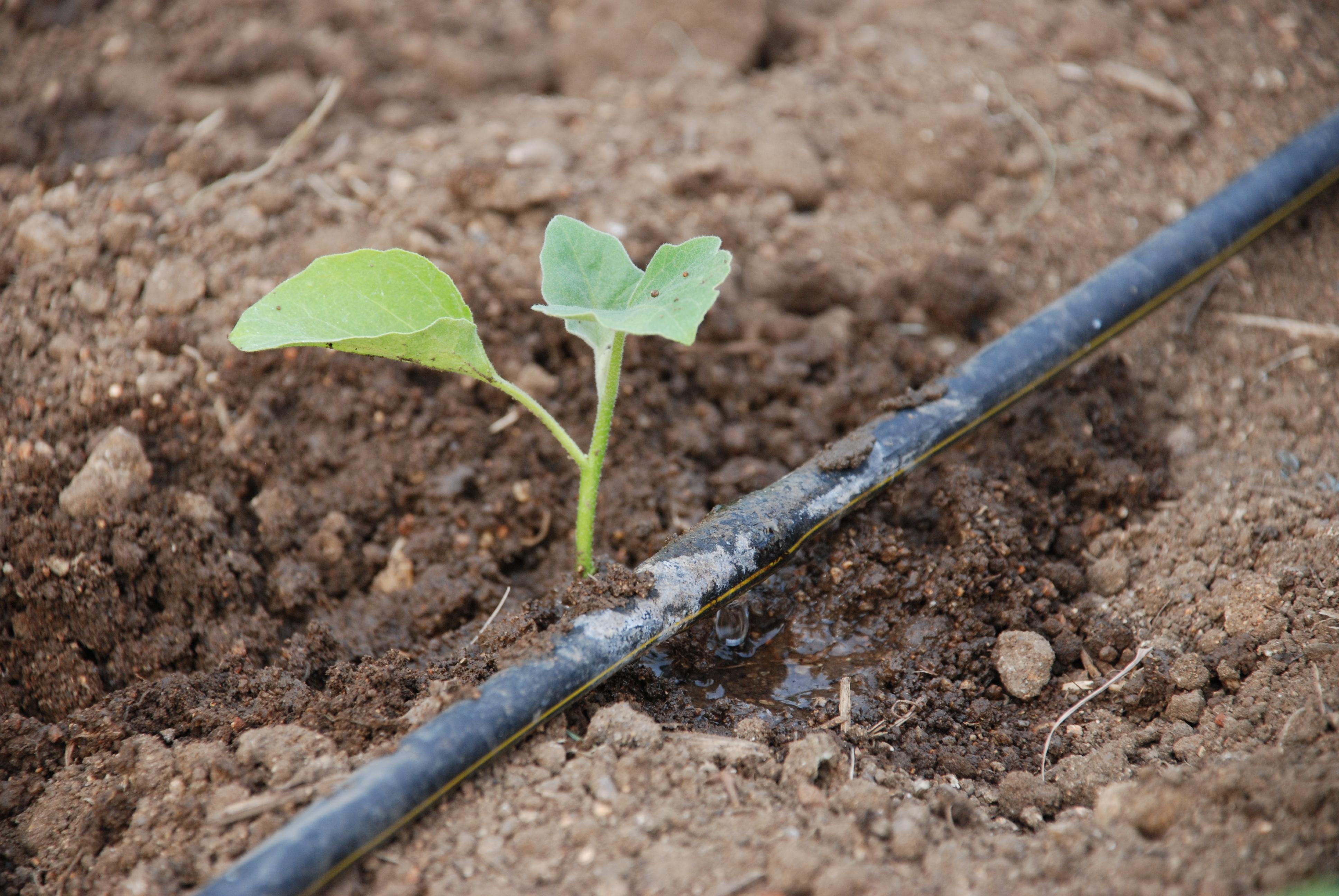 Agrometeorology microclimate and plant growth - Tuberias de riego por goteo ...