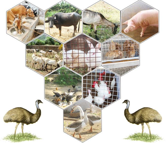 animal husbandry home