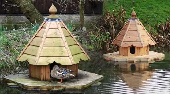 Poultry duck housing and feeding animal husbandry home for Building a duck house shelter