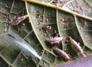 TNAU Agritech Portal :: Crop Protection