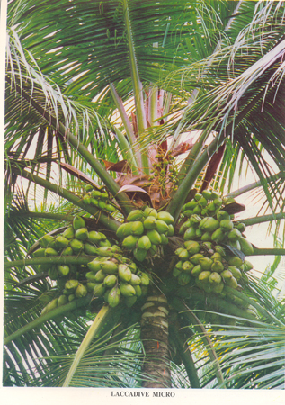 Expert System for Coconut :: Tall Varieties