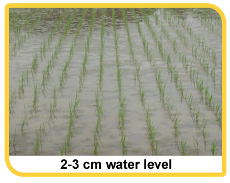 Cultivation Practices >> Water Management