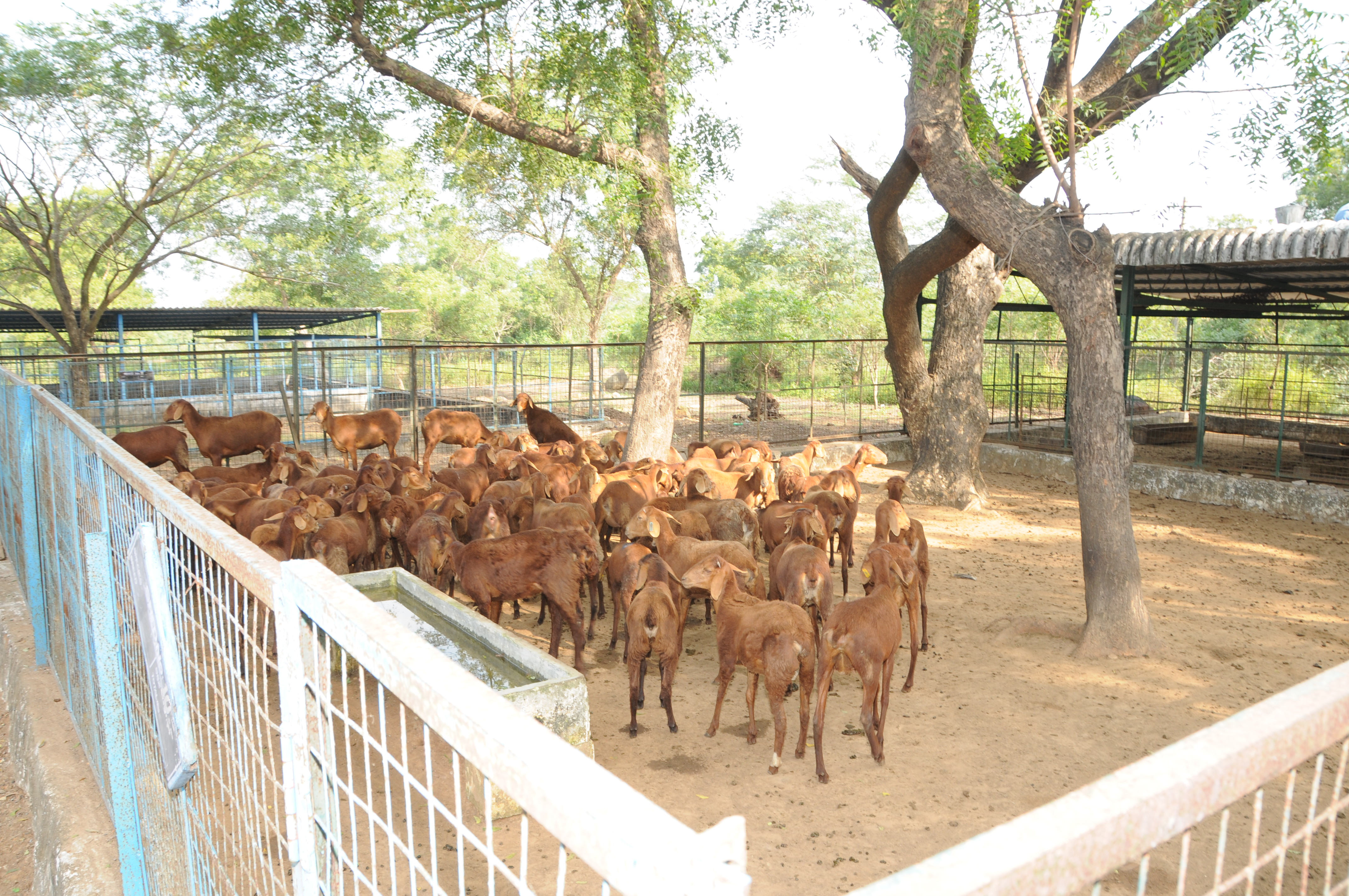 Goat Farm Layout Design