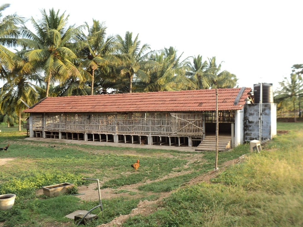 Housing Of Sheep And Goats