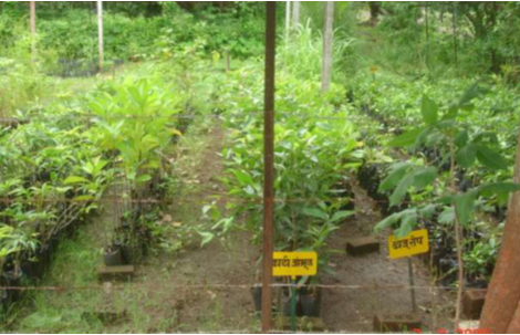 importance of fruit crops in india