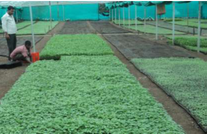 TNAU Agritech Portal :: Sustainable Agriculture