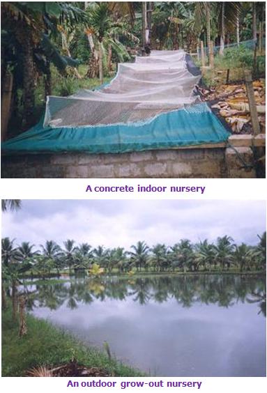 Fisheries Freshwater Prawn