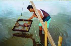 fresh water aquaculture in andhra pradesh Government of andhra pradesh abstract fisheries department – regulation of fresh water aquaculture in the state – amendment orders - issued.