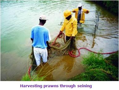 Biofloc Fish Farming In West Bengal