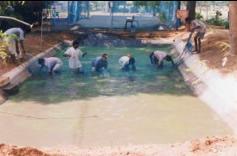 Fisheries shrimp culture for Minimum depth for koi pond