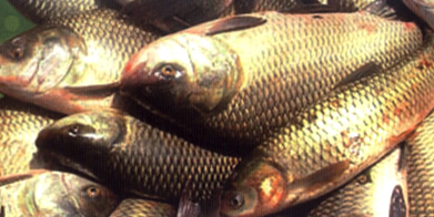 Fisheries :: Home