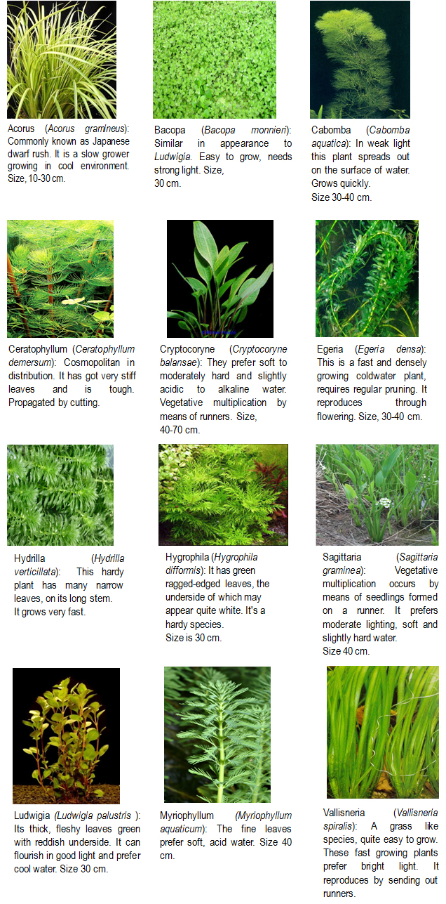 Types Of Water Plants Pictures to Pin on Pinterest - PinsDaddy