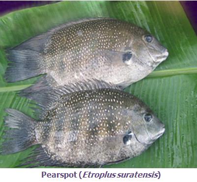 Fisheries :: Sea Fishes