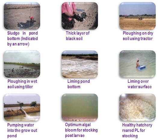 Fisheries shrimp culture for Design of farm pond ppt