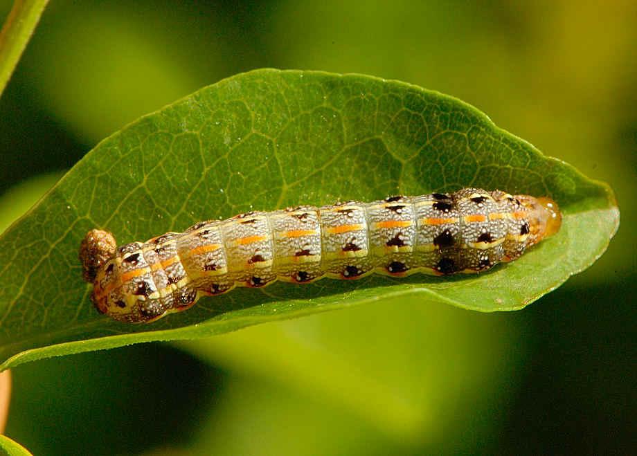 Forestry :: Pest Management