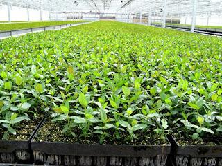 Image result for plantation nursery