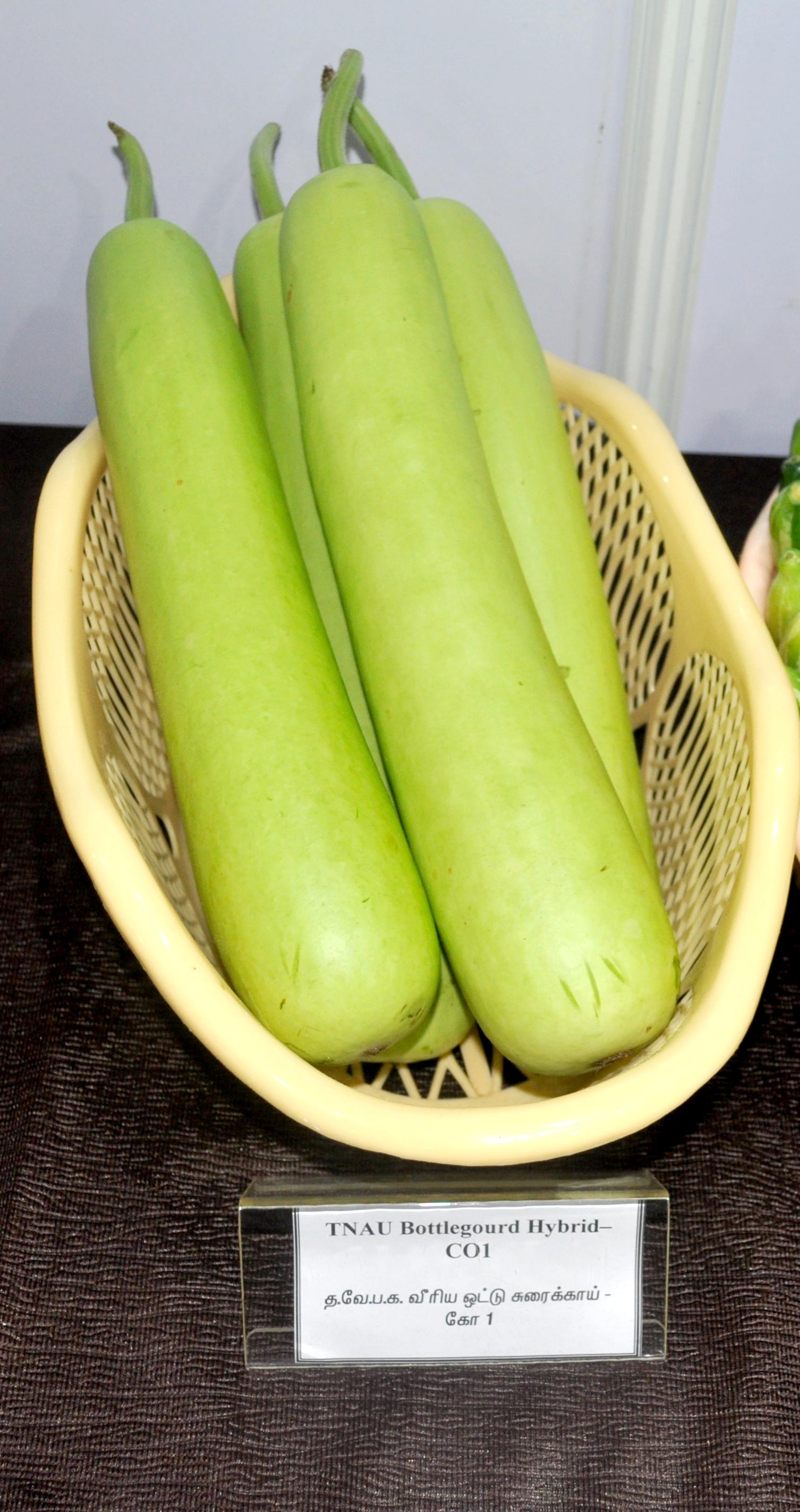 horticulture vegetables bottle gourd