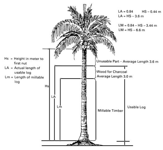 crown tree trunk diagram horticulture plantation crops coconut botany  horticulture plantation crops coconut botany