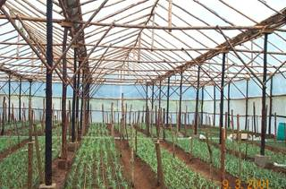 Horticulture :: Greenhouse cultivation