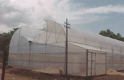 Agritech Horticulture Greenhouse Cultivation