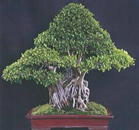 Horticulture Landscaping Bonsai