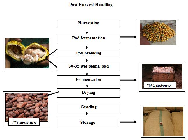 horticulture agriculture and post harvest management 3college of agriculture, fisheries and forestry, fiji national university, koronivia ,  keywords: fruits, pacific, postharvest, horticulture, food loss, food security.