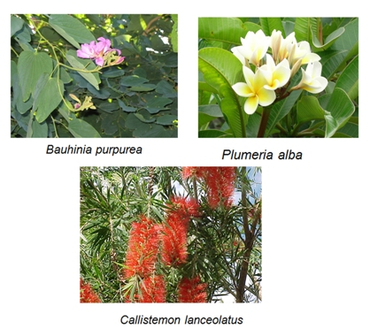 Horticulture landscaping types of garden shrubs sciox Images