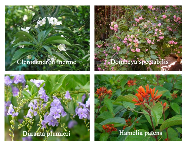 Different types of shrubs with pictures and names www for Landscaping plants pictures and names