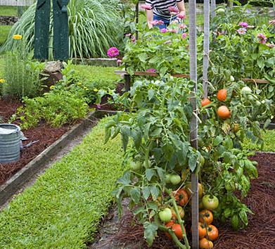 Home garden plants in india.