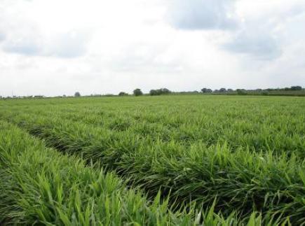 field in tamil