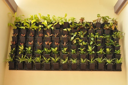 Horticulture landscaping vertical gardening solutioingenieria Images