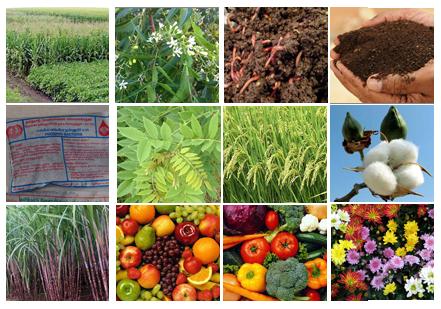 organic vs non organic foods essay