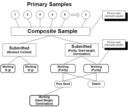 Primary Samples