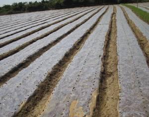 http://agritech.tnau.ac.in/ta/Agriculture/images/agri_majorareas_dryland_drylandtechnologies_clip_image006_0000.jpg