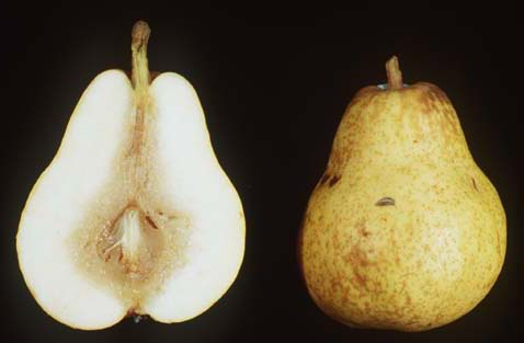 how to stop pears from browning