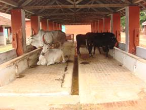Livestock Cattle Housinganimal Husbandry Home