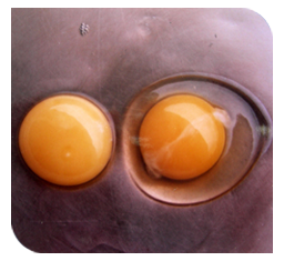 Watery albumin of egg