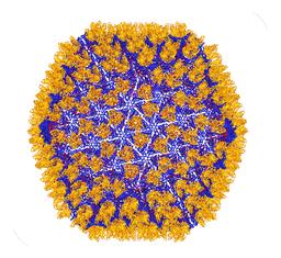 Birna virus