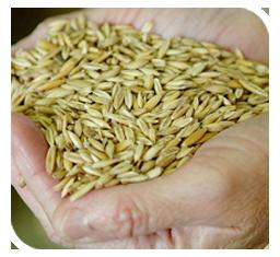 Toxin free feed