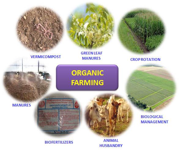 Organic Farming Basic Steps Of Organic Farming