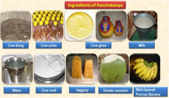 ORGANIC FARMING :: Panchakavya